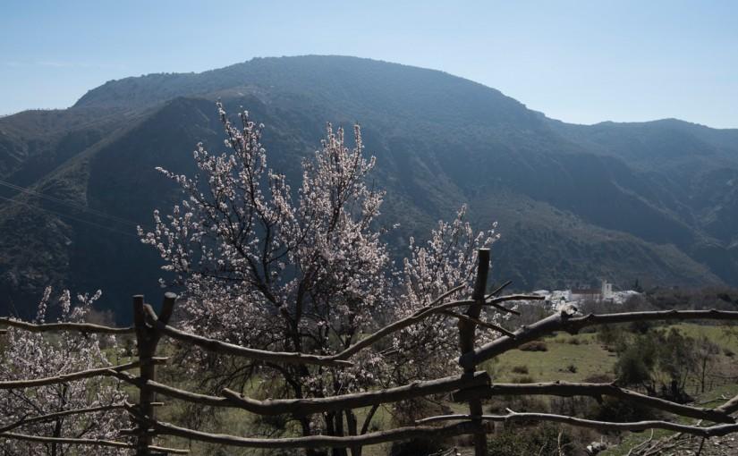 Almendros y valla de almez